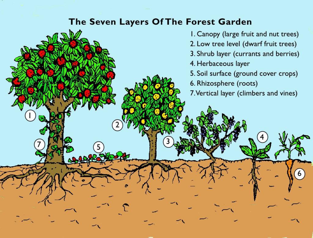forest-garden-page1-1024x780