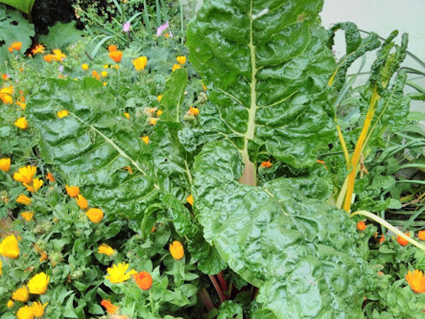 Grow Beyond Vegan! - An Introduction to Plant-Based Permaculture at Karuna Insight Design, Shropshire